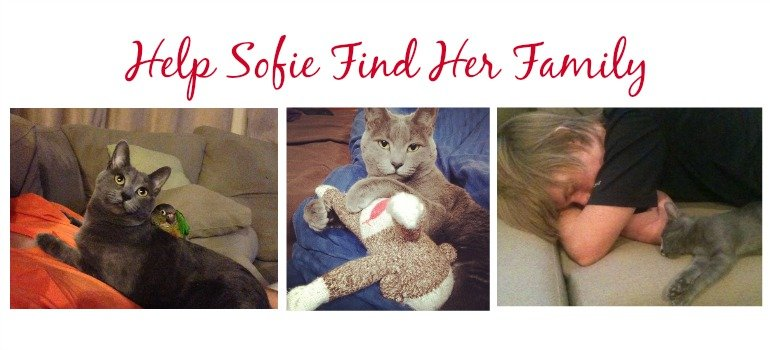 Help Me Find My Family… #FindSofie