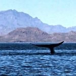 whale watching in loreto mexico