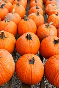 How to Keep Pumpkins From Rotting